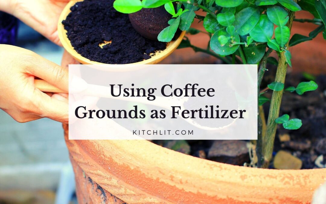 Using Coffee Grounds as Fertilizer