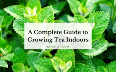 A Complete Guide to Growing Tea Indoors